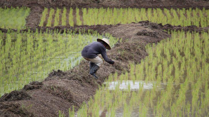 【稲作】米は品種も栽培方法も多種多様【高校地理】