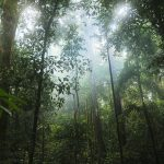 【Af】熱帯雨林気候の植生とか土壌とか生活とか