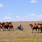 【遊牧】遊牧と放牧の違い~主な遊牧民の紹介