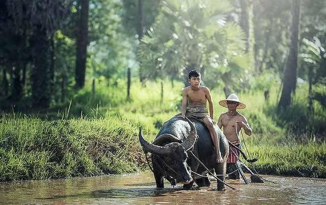 集約的稲作農業・アジア式稲作農業について分かりやすく解説します